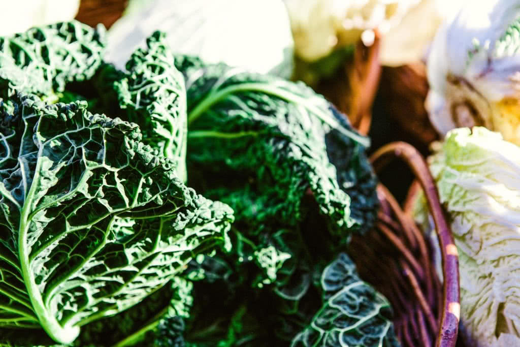 Image of bright-cabbage-close